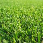 gramado corte