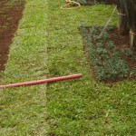 jardinagem em curitiba
