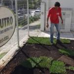 plantação de grama