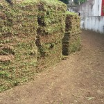 Plantação de gramados em curitiba