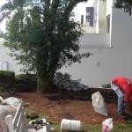 plantio de gramados
