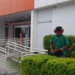 jardinagem curitiba