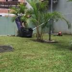 Manutencao de jardim para condominios