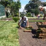plantio de grama